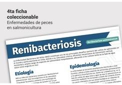Salmonexpert presenta ficha técnica sobre Enfermedad Bacteriana del Riñón