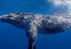 Sernapesca inicia hoy ciclo de charlas sobre sustentabilidad de fauna marina