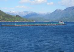 Alsaker Fjordbruk slakter ut fisken på ILA-mistenkt lokalitet