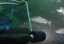 Andfjord Salmon har valgt denne biomasse- og velferdssensoren