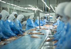 Salmones Austral obtiene crédito por US$40 millones para financiar plan de inversiones