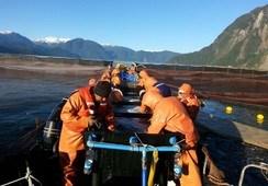 Salmonicultura chilena refuerza estrategia conjunta para disminuir uso de fármacos