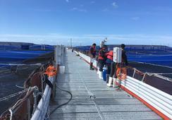 Industria chilena del salmón acelera utilización de tecnologías remotas