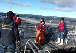 Sernapesca y Armada fiscalizan escape de peces en lago Llanquihue