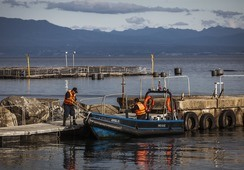 Salmones Camanchaca presenta querella criminal por daños en centro
