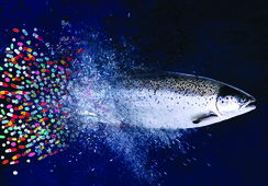 Mevea participa en charlas sobre salmonicultura de la UFRO