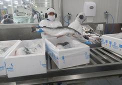 Multiexport Foods disminuye en 29% envíos de residuos a relleno sanitario