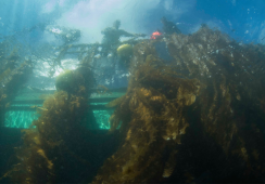 Financial kelp: seaweed farmer raises $1.5m for expansion