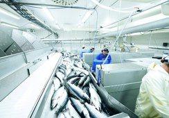 A julio: Exportaciones de productos del mar noruegos alcanzan récord