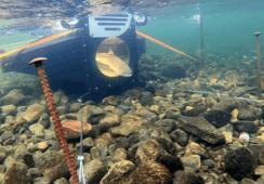 Innovadora cámara permite clasificar entre salmón escapado y salvaje