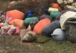 Sernapesca notificará a empresas acuícolas por contaminación de playas en Chiloé