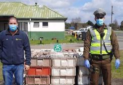 Sernapesca y Carabineros detectan transporte de salmón ilegal en La Unión