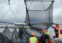 Jaulas sumergibles Atlantis Subsea Farming presentan positivos resultados