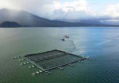 Chile: Crearán primera guía para seguridad de estructuras en acuicultura oceánica
