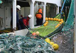 Undersøking: Fiskeri og oppdrett mest berekraftig