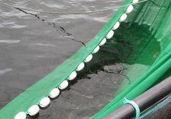 Afirman que innovadora red disminuye a la mitad desafíos con piojos del salmón