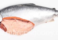 Caracterizan quistes lípidicos en salmón coho y trucha arcoíris