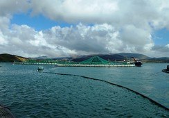 Fish farmers join Irish seafood sector's Brexit task force