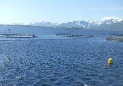 Liten dupp for Lofoten Aqua