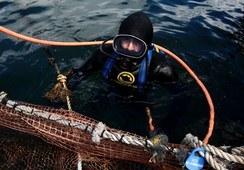 Productores de salmón chileno impulsarán capacitaciones para un buceo seguro