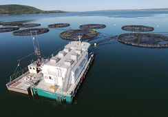 Wheels finally start to turn for Nova Scotia aquaculture