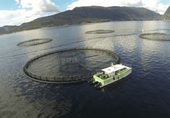 80 prosent av omsetningen kommer fra havbruksnæringen