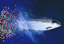 Oceana da a conocer tercer ránking de uso de antibióticos en salmonicultura
