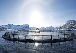Norsk Sjømat utsetter børsnoteringsplaner
