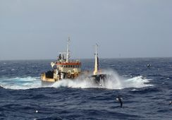 Aprueban proyecto que mejora condiciones de habitabilidad para naves acuícolas