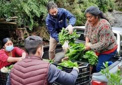 Reactivación económica: Salmonicultores se abastecerán de hortalizas locales en Quellón