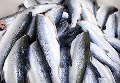 Stort fall i sjømateksporten i november