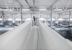 Listo el financiamiento para comenzar a construir RAS de salmón en China