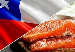 Valor de exportaciones de salmón chileno en 2020 disminuye 14%