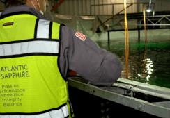 Precio de salmón de Atlantic Sapphire supera los US$12 por kilo