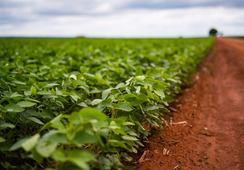 Blir første internasjonale bransje med avskogingsfrie brasilianske soyaleverandører