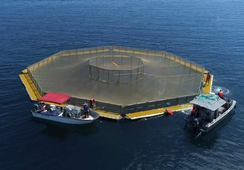 Army engineers pave the way for US fish farming expansion