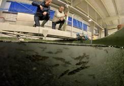 Fikk tillatelse for Norges første settefiskanlegg for torsk med RAS teknologi