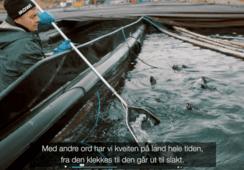 Kveiteprodusent Glitne/ Sogn Aqua om slam