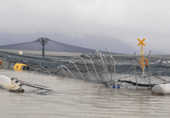 Antall rømminger femdoblet i Chile