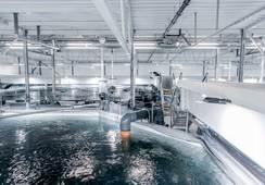 Fiskevelferdsprisen: Holder dødeligheten svært lav