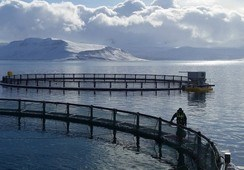 Icelandic Salmon buys hatcheries as it eyes 7,000t volume increase