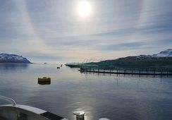 Ice Fish Farm investerer tungt for oppskalering