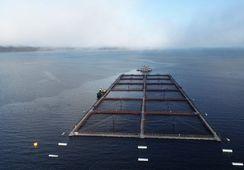 Aumentan centros de salmón que buscan certificación PROA de Sernapesca