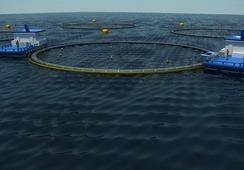 Más de 80 millones de peces han sido tratados con Alpha Flux Bath en Chile