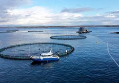 ¿Cómo los robots pueden ser los próximos guardianes de la acuicultura?