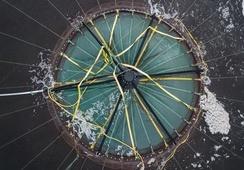 Tredje utsett av fisk i Atlantis