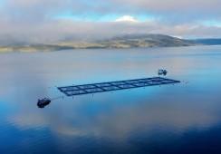 Productores de salmón chileno logran certificar sobre 80% de su biomasa ASC