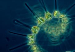 OTAQ plankton alert system on market 'within 18 months'