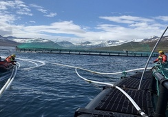 Litt svakere for Ice Fish Farm