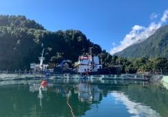 Factor Floración de Algas Nocivas golpea los resultados de Salmones Camanchaca